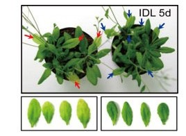 A Mutation in Plant-Speci…