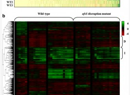 Transcriptome analysis of…